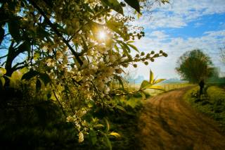 nature, spring, landscape, field, road, branch, flowers, flowering, the sun, rays