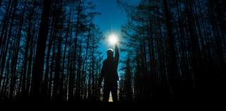 forest, night, photo, creative, the moon