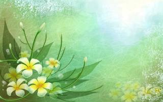 léto, Цветы.Зелень