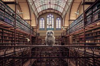 library, books, Owl, creative