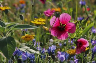 полевые цветы, природа, трава