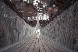 dog, the bridge, running