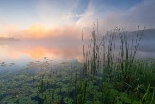 summer, the river, lilies, fog, landscape, beautiful, morning, photographer, Андрей Олонцев