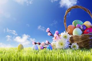 holiday, Easter, grass, the sky, basket, EGGS, eggs, branches, cherry, flowers, chrysanthemum