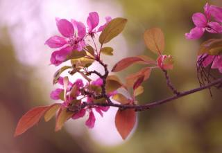 nature, spring, branch, flowering, leaves