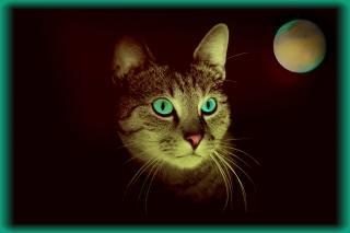 planeta, kočka, oči
