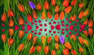 любимой, tulips, hearts