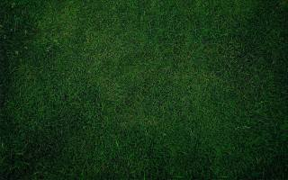 tráva, zeleň, trávník