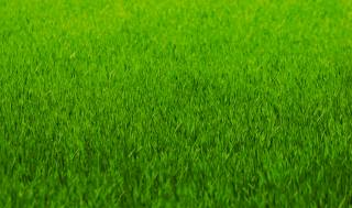 greens, grass, lawn