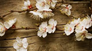 květiny, jaro