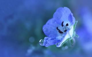 makro, květina, kapka, voda
