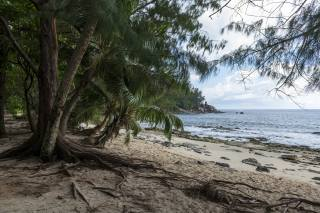 tropics, shore, coast, Police Beach Seychelles, palm trees, the beach, nature
