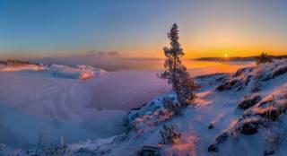 příroda, krajina, ladoga, jezero, pobřeží, tráva, strom, borovice, zima, sníh, led, slunce, paprsky, západ slunce