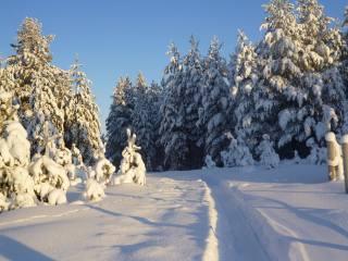 příroda, krajina, zima, sníh, stromy, jedli, les, stezka, pás