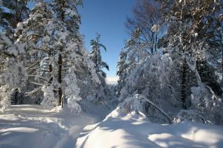 příroda, krajina, zima, sníh, stromy, Norsko, závěje, stezka, nebe
