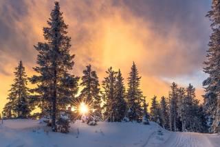 природа, краєвид, зима, дерева, їли, ліс, сніг, дорога, захід, сонце, промені
