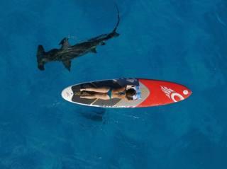 акула, дошка, серфінг, дівчина