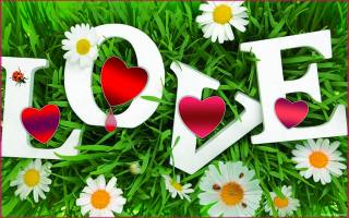 hearts, chamomile, grass, ladybugs, positive