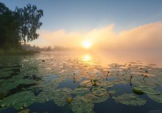morning, the river, lilies, fog, dawn, photo, Андрей Олонцев