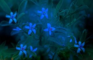 квіти, рослина, флора