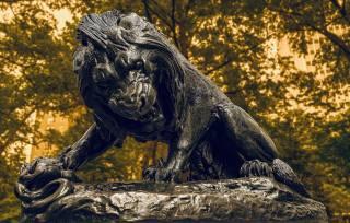 lion, beast