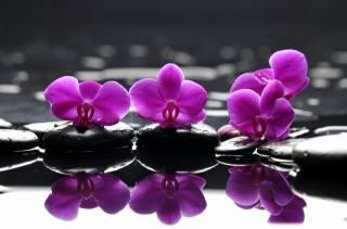 flowers, flower, tropical, экзотический, Orchid, orchids, stone, stones, water