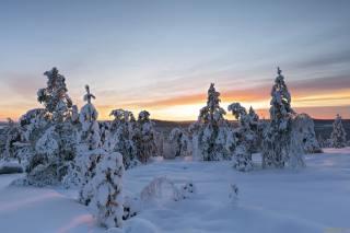 zima, sníh, západ slunce, stromy