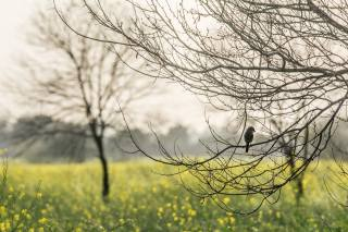 spring, trees, branches, bird