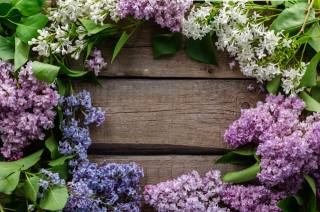 lilac, flowers, frame, tree, texture, flora, flowering