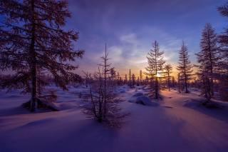 západ slunce, zima, sníh, závěje, stromy, krajina
