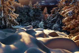 Robert Didierjean, пейзаж, природа, зима, лес, ели, деревья, снег, сугробы, вечер