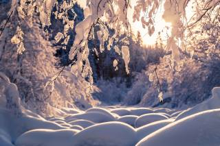 има, лес, снег, деревья, ветки, природа, сугробы, Thomas Zagler