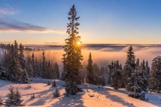 зима, дорога, солнце, лучи, снег, деревья, пейзаж, природа, туман, утро, ели, тени, Леса, Jorn Allan Pedersen, Allan Pedersen