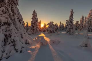 природа, пейзаж, зима, снег, солнце, лучи, закат, деревья, ели, Agnеs Perrodon
