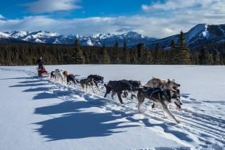 собаки, упряжка, перегон, зима