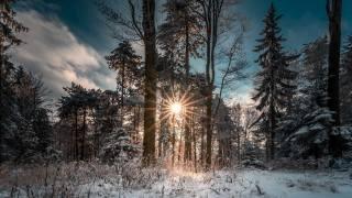 природа, пейзаж, зима, лес, деревья, снег, трава, солнце, лучи