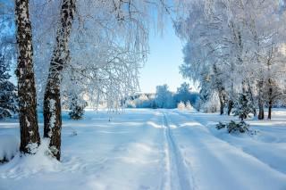 природа, пейзаж, деревья, березы, зима, снег, дорожка