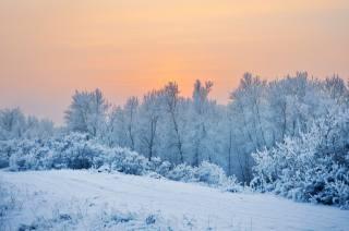 природа, пейзаж, зима, снег, деревья, КУСТЫ, иней, склон, закат