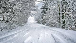 зима, снег, природа, ветки