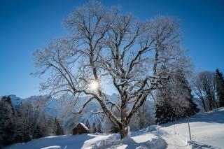 Швейцария, зима, Braunwald, снег, деревья, лучи света, природа