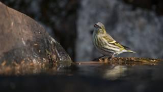 vrabec, pták, makro