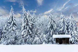 зима, лес, природа
