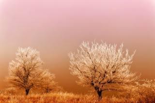 деревья, иней, туман, зима
