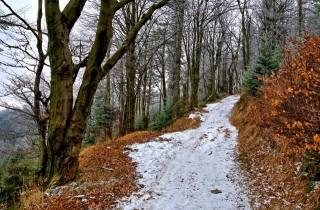 лес, тропинка, листья, снег