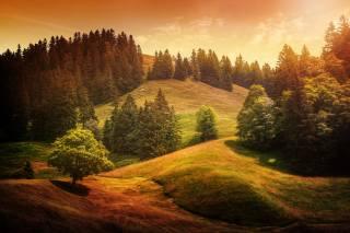 příroda, krajina, kopce, louky, stromy, jedli, tráva