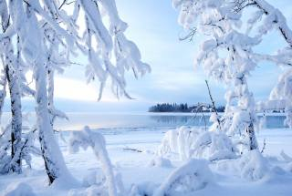 winter, snow, nature, branches, the lake