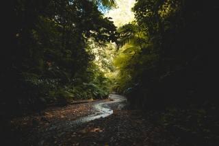 струмок, ліс, дерева