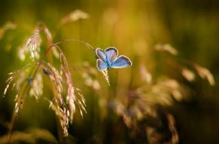 nature, a blade of grass, butterfly, macro