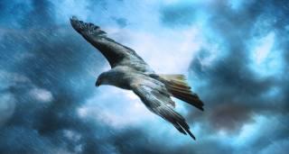 bird, the rain, art, the sky