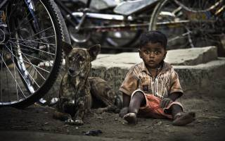 хлопчик, собака, велосипедное колесо